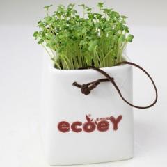 创意桌面绿植 陶瓷手提袋小盆栽 办公室迷你植栽比赛奖品