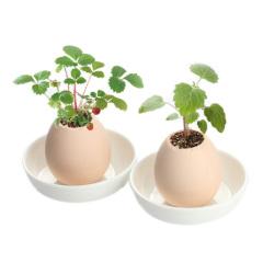 【幸运蛋薄荷款】绿色清新盆栽 仿真鸡蛋壳小盆栽 员工礼品