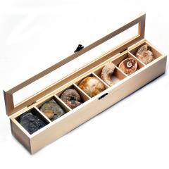 七格原矿原石化石生物标本 地质教学模型 礼盒套装