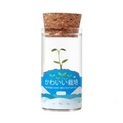 创意栽培可爱小植物 桌面趣味小摆件 迷你水培绿植礼品