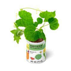 趣味DIY植栽 菜园仔栽培罐 办公室桌面小摆件 儿童益智礼品